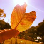 飯田公園に落ち葉をひろいに行く