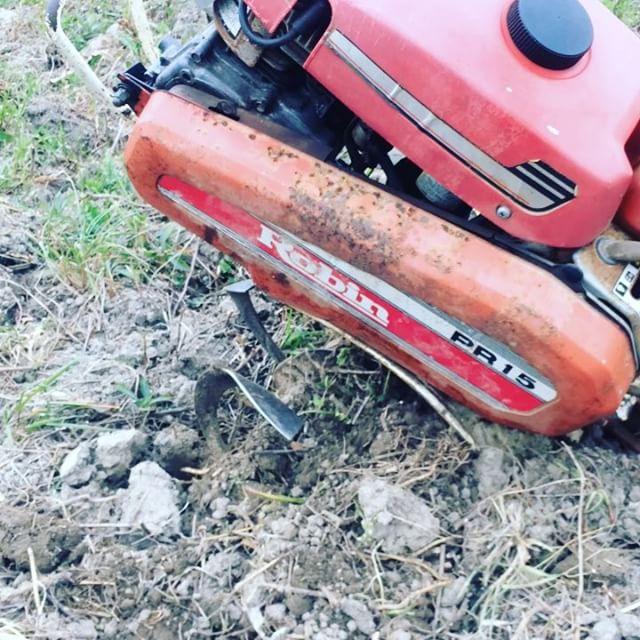 草の根が張ってカチカチになった土地をシャベルで起こしてから、耕うん機のロビンちゃんでさらに細かく耕していく#土起こし #耕うん機 #畑を耕す (Instagram)