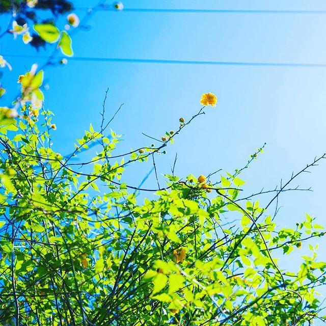 葉っぱの透け感がきれい (Instagram)
