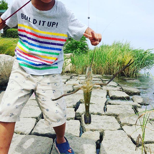 息子と佐鳴湖で手長エビ釣り。初めてなのに息子の方がガシガシ釣ってる#釣り #手長エビ #佐鳴湖 #親子 (Instagram)