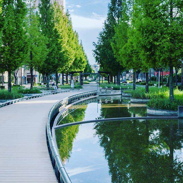 すきま時間に街なかうろうろ。街路樹はもりもりしてる方が好き#景観 #町並み #街路樹 #浜松市中区 #散歩 (Instagram)