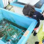 浜松の水族館こと「ウォット」の「探検ツアー」に参加