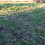 畑 シャベルと耕うん機を使って土を起こしていく