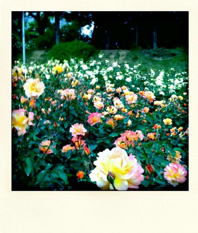 photo3.jpg